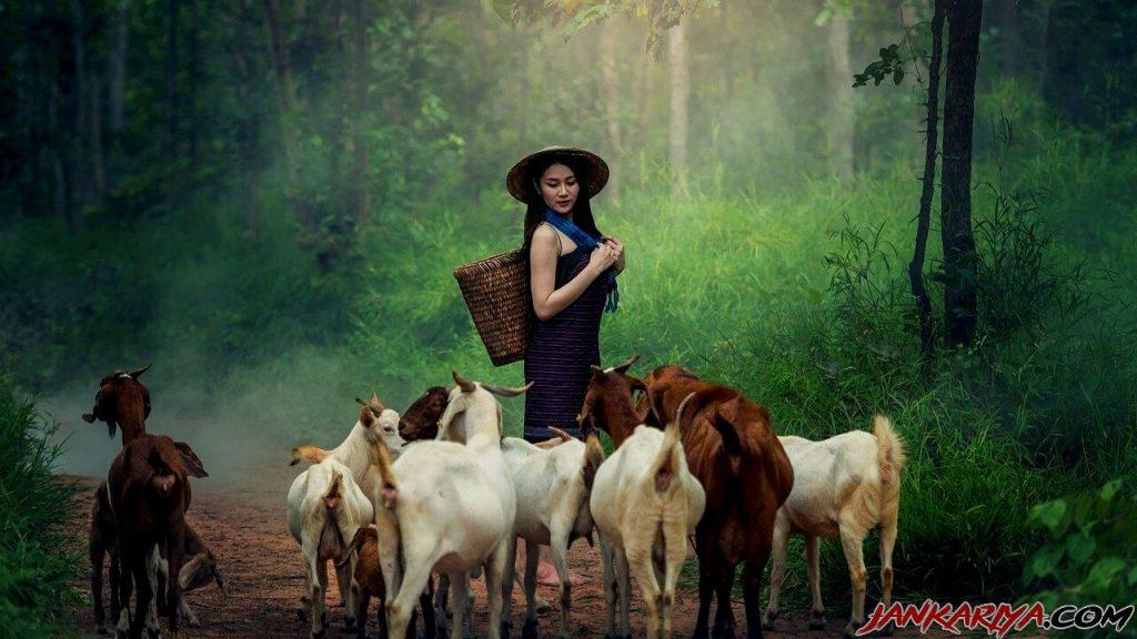 बकरी पालन व्यवसाय