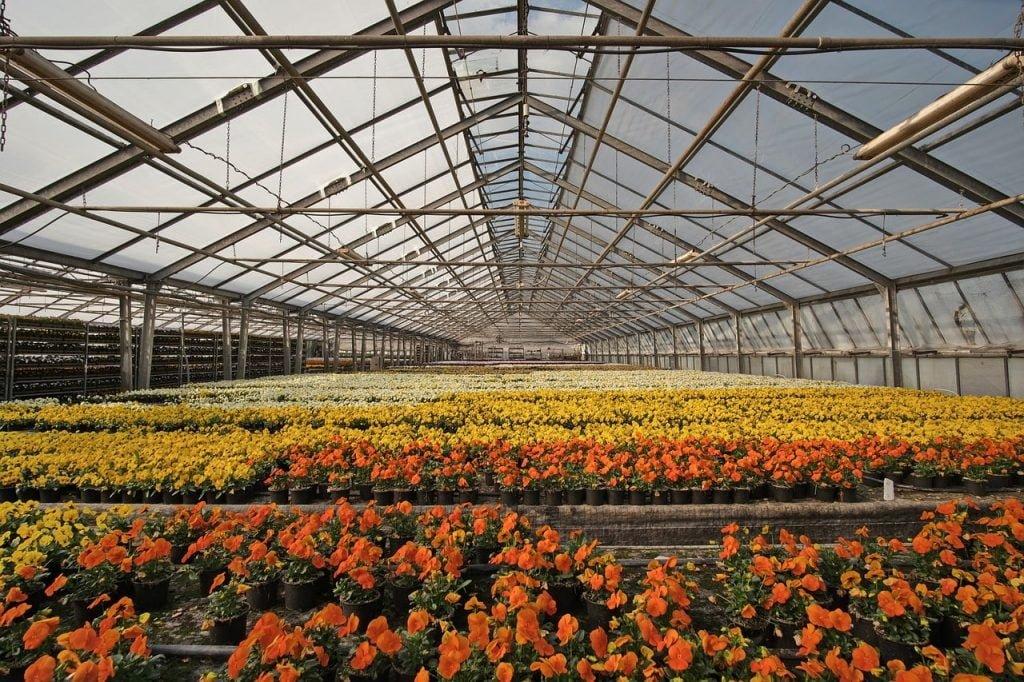 ग्रीनहाउस फूलों का निर्यात
